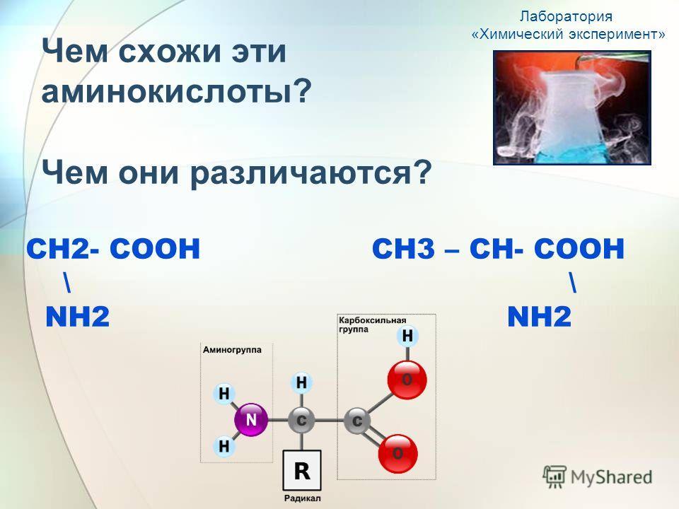 Чем схожи эти аминокислоты? Чем они различаются? СН2- СООН СН3 – СН- СООН \ \ NH2 NH2 Лаборатория «Химический эксперимент»