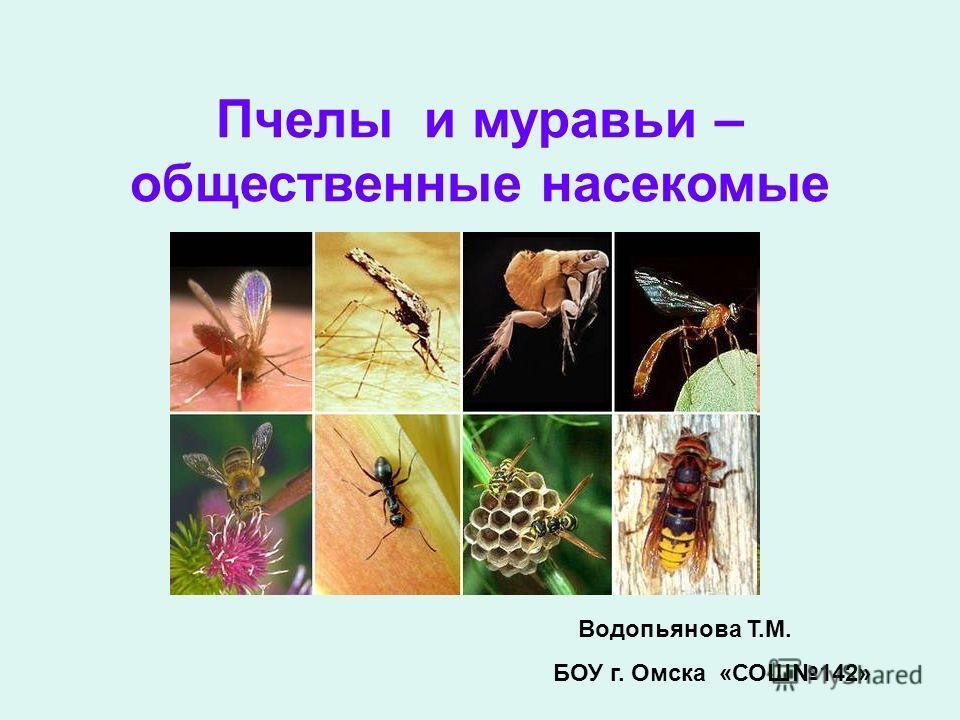 Пчелы и муравьи – общественные насекомые Водопьянова Т.М. БОУ г. Омска «СОШ142»