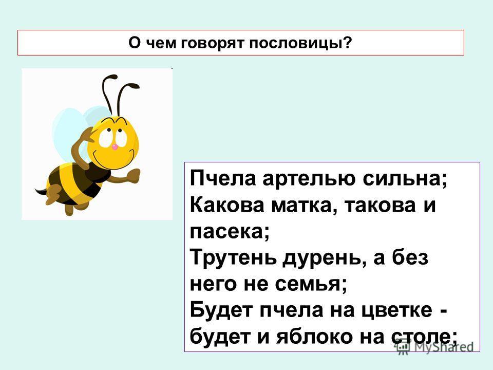 Пчела артелью сильна; Какова матка, такова и пасека; Трутень дурень, а без него не семья; Будет пчела на цветке - будет и яблоко на столе; О чем говорят пословицы?
