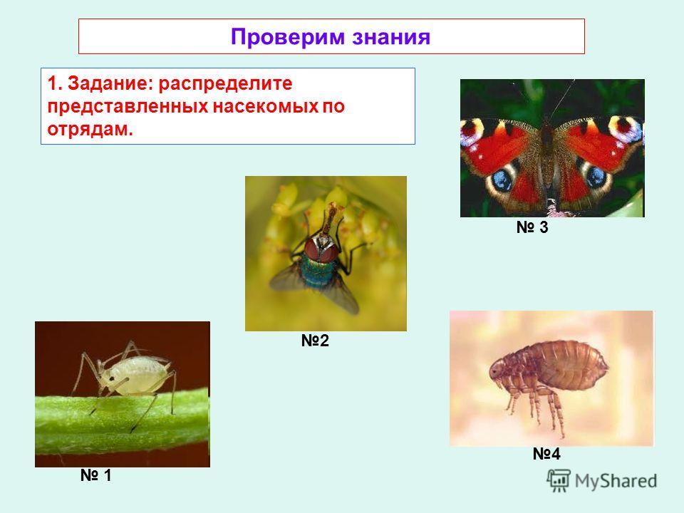 Проверим знания 1. Задание: распределите представленных насекомых по отрядам. 3 1 4 2