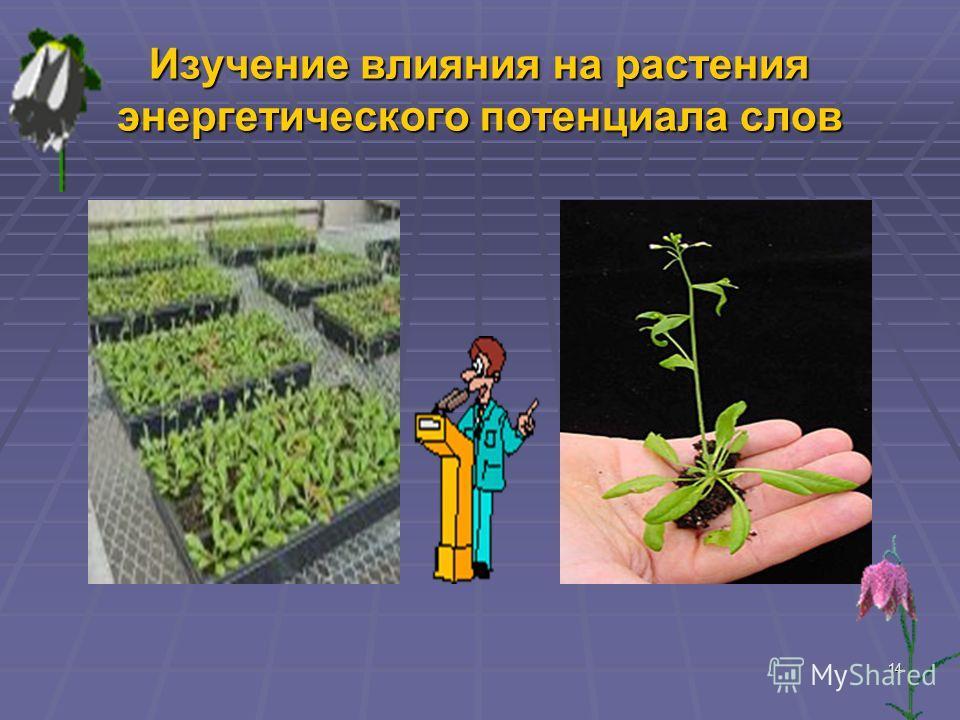 14 Изучение влияния на растения энергетического потенциала слов
