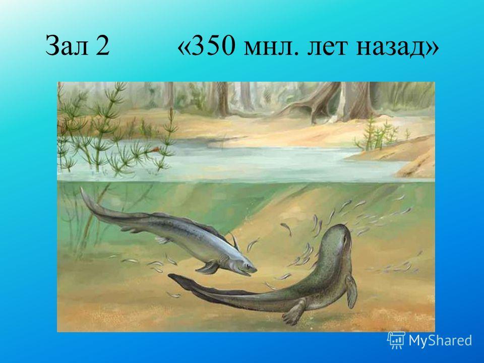 Зал 2 «350 мнл. лет назад»