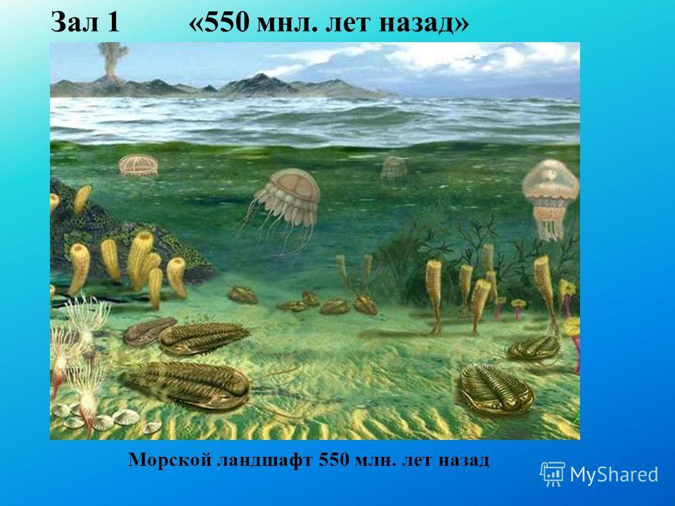 Зал 1 «550 мнл. лет назад» Морской ландшафт 550 млн. лет назад