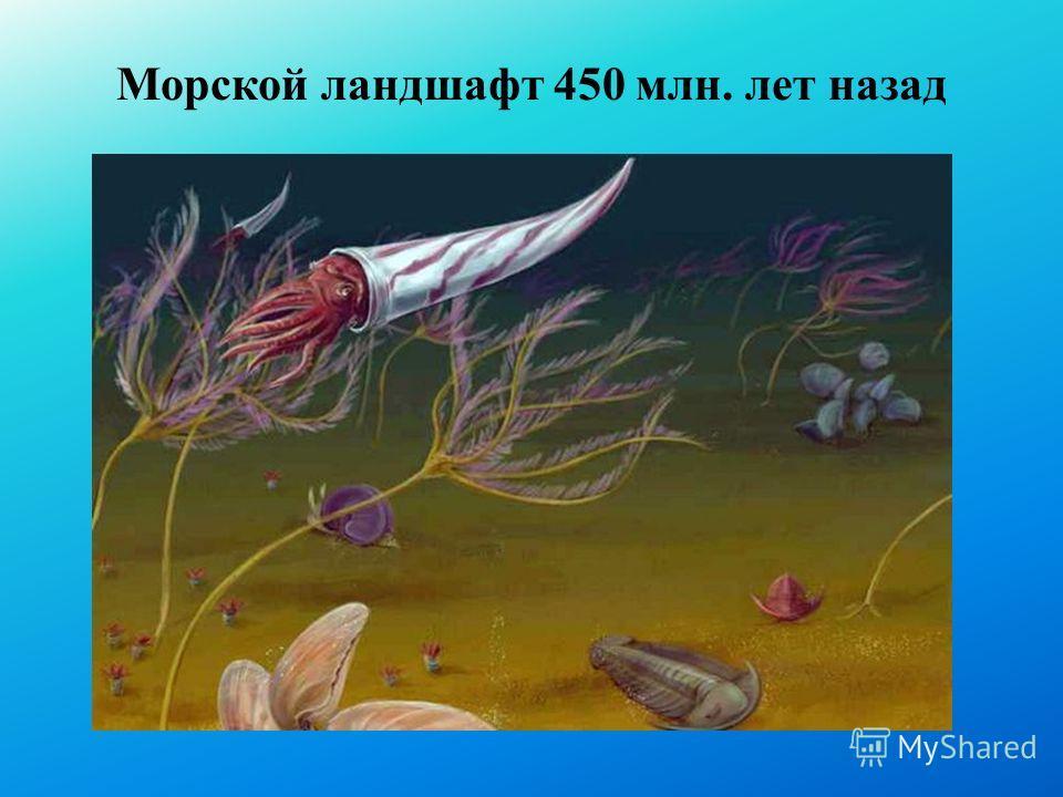 Морской ландшафт 450 млн. лет назад