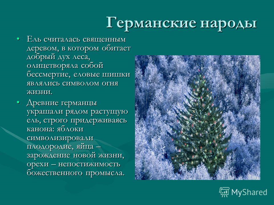 Германские народы Ель считалась священным деревом, в котором обитает добрый дух леса, олицетворяла собой бессмертие, еловые шишки являлись символом огня жизни.Ель считалась священным деревом, в котором обитает добрый дух леса, олицетворяла собой бесс