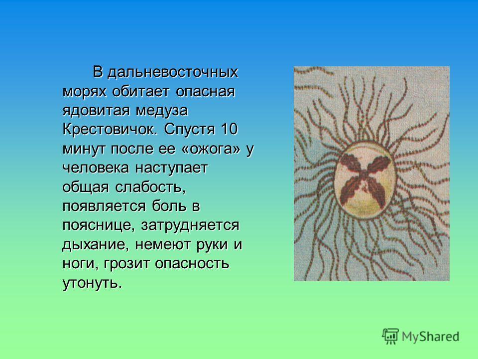 В дальневосточных морях обитает опасная ядовитая медуза Крестовичок. Спустя 10 минут после ее «ожога» у человека наступает общая слабость, появляется боль в пояснице, затрудняется дыхание, немеют руки и ноги, грозит опасность утонуть. В дальневосточн