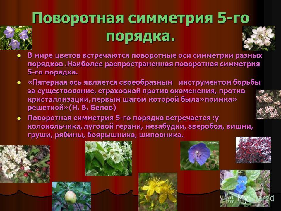 Поворотная симметрия 5-го порядка. В мире цветов встречаются поворотные оси симметрии разных порядков.Наиболее распространенная поворотная симметрия 5-го порядка. В мире цветов встречаются поворотные оси симметрии разных порядков.Наиболее распростран