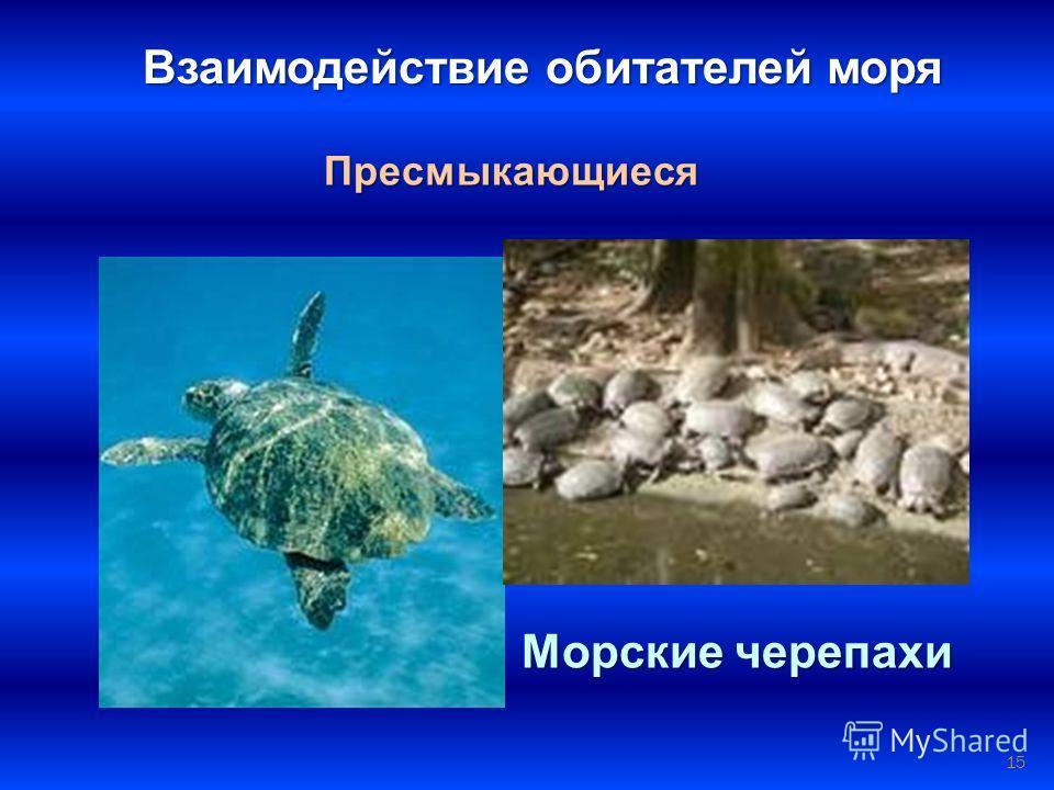 15 Взаимодействие обитателей моря Пресмыкающиеся Морские черепахи