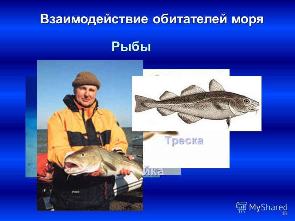 16 Взаимодействие обитателей моря Рыбы Электрический скат Пикша Сайка Треска
