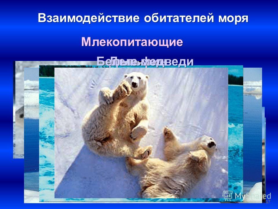 17 Взаимодействие обитателей моря Млекопитающие КитыТюлени Нерпа Моржи Дельфин Белые медведи