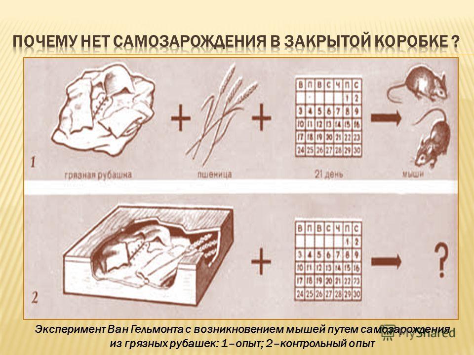 Эксперимент Ван Гельмонта с возникновением мышей путем самозарождения из грязных рубашек: 1–опыт; 2–контрольный опыт