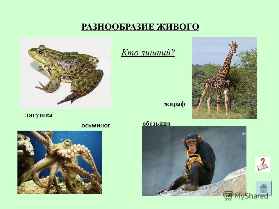 Кто лишний? лягушка обезьяна осьминог жираф РАЗНООБРАЗИЕ ЖИВОГО