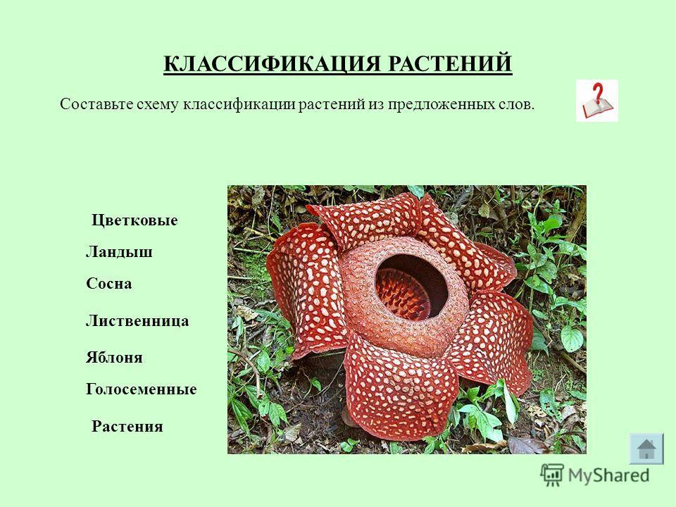 Каталог миниатюрных фиалок Екатерины Зыбиновой
