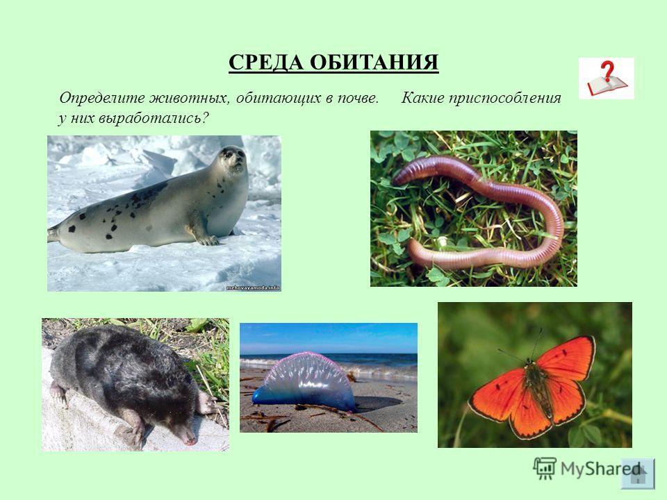 СРЕДА ОБИТАНИЯ Определите животных, обитающих в почве. Какие приспособления у них выработались?