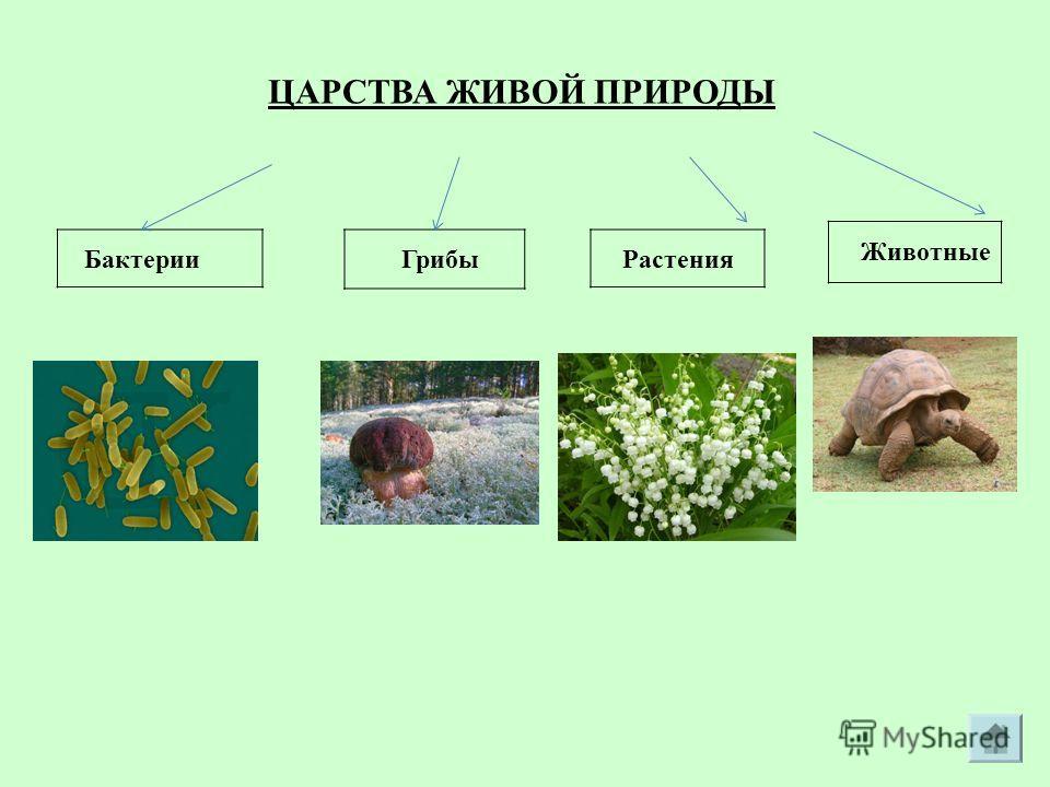 ЦАРСТВА ЖИВОЙ ПРИРОДЫ Животные Грибы РастенияБактерии