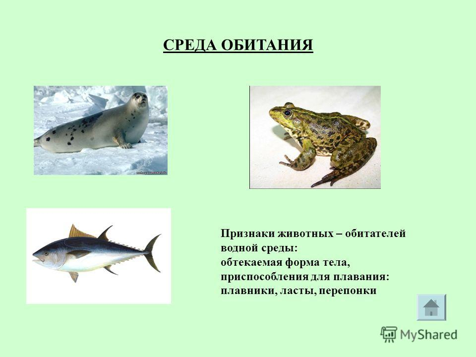 СРЕДА ОБИТАНИЯ Признаки животных – обитателей водной среды: обтекаемая форма тела, приспособления для плавания: плавники, ласты, перепонки