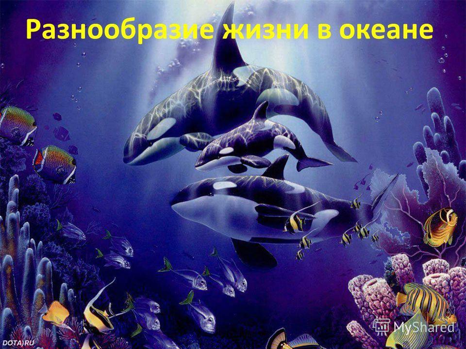Разнообразие жизни в воде. Разнообразие жизни в океане