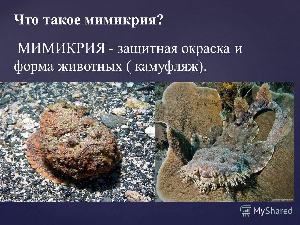 Что такое мимикрия? МИМИКРИЯ - защитная окраска и форма животных ( камуфляж).