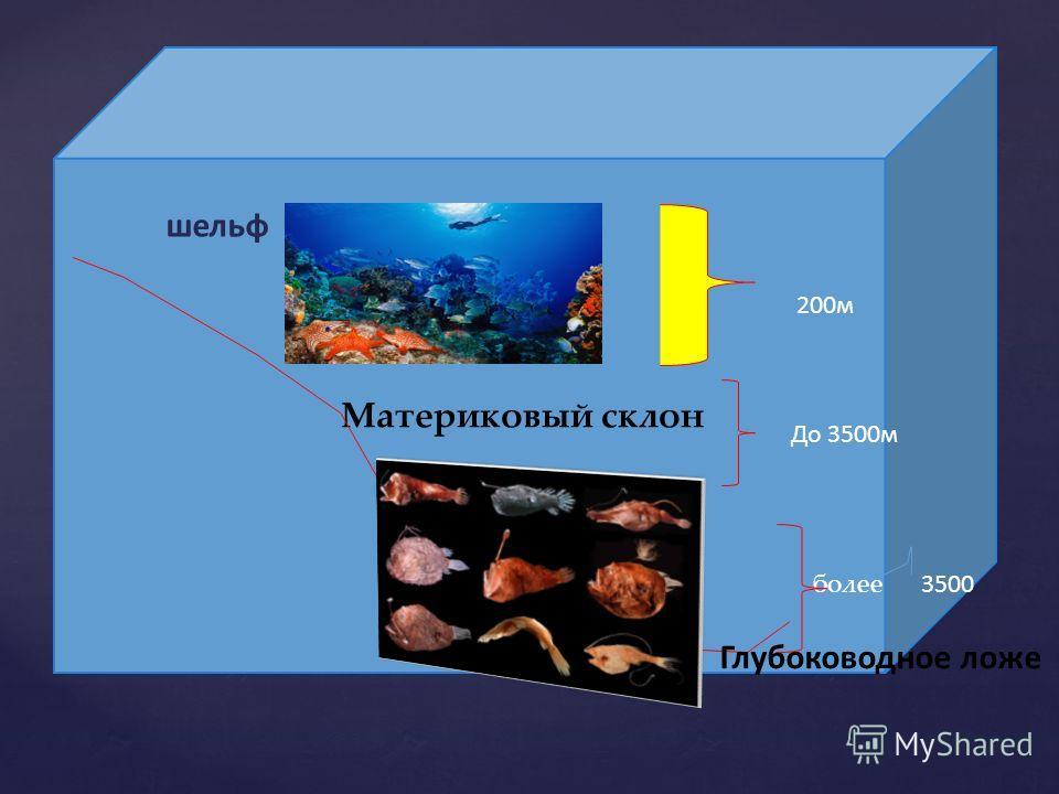 Материковый склон более шельф Глубоководное ложе 200м До 3500м 3500