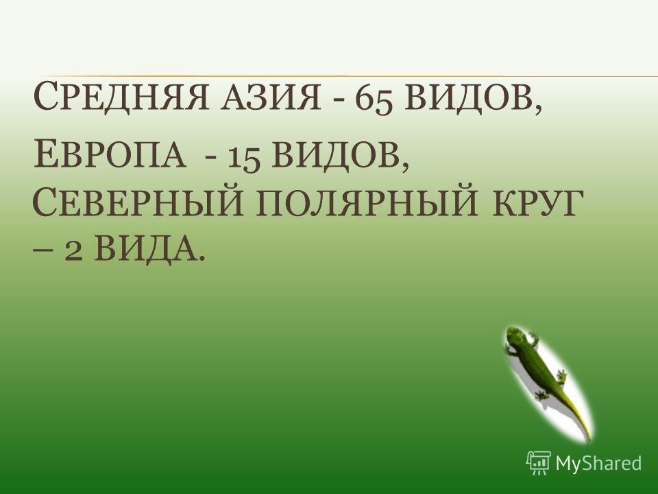 С РЕДНЯЯ АЗИЯ - 65 ВИДОВ, Е ВРОПА - 15 ВИДОВ, С ЕВЕРНЫЙ ПОЛЯРНЫЙ КРУГ – 2 ВИДА.