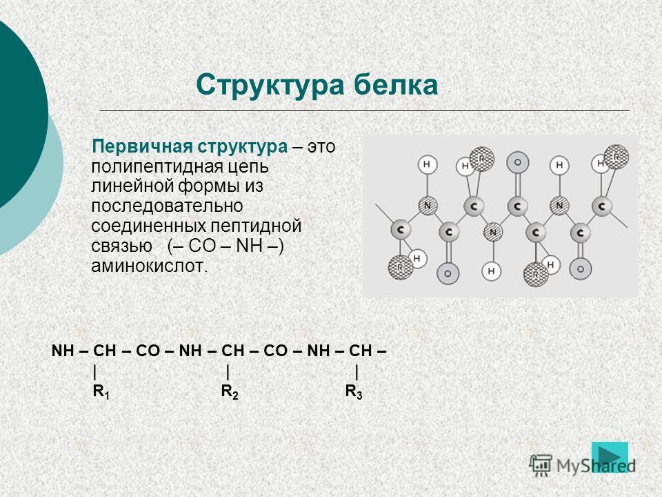 Структура белка Первичная структура – это полипептидная цепь линейной формы из последовательно соединенных пептидной связью (– CO – NH –) аминокислот. NH – CH – CO – NH – CH – CO – NH – CH – | | | R 1 R 2 R 3