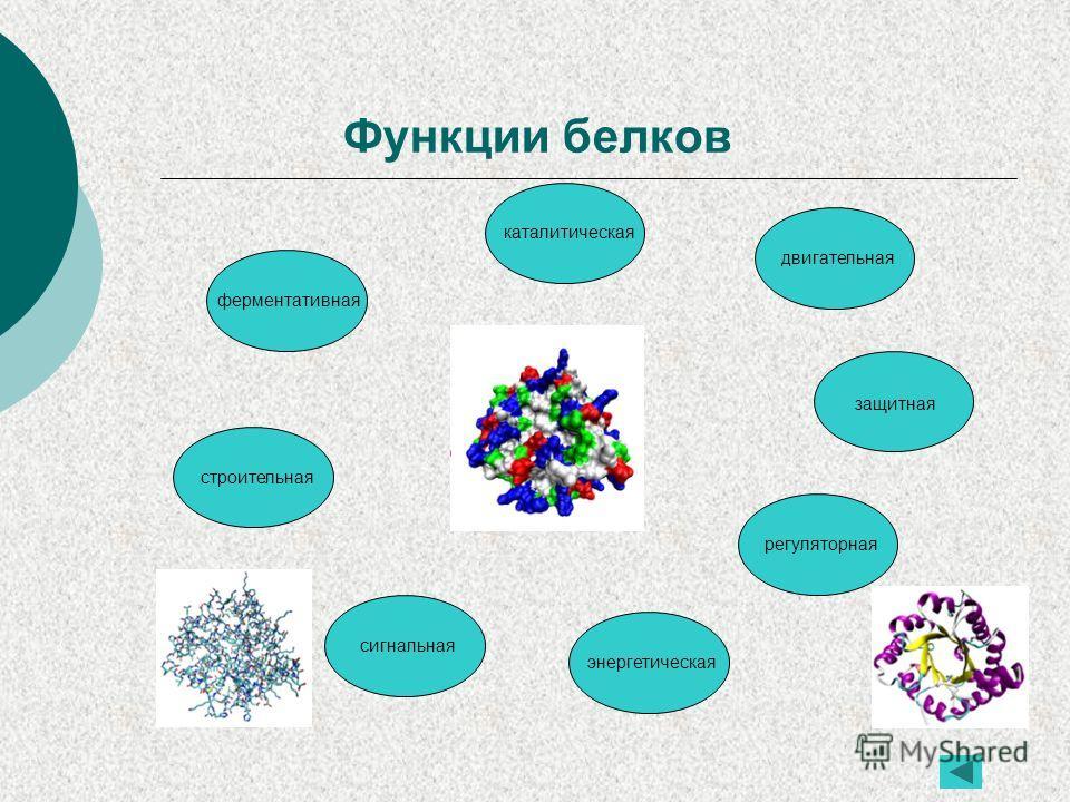 Функции белков ферментативная строительная каталитическая сигнальная двигательная защитная регуляторная энергетическая