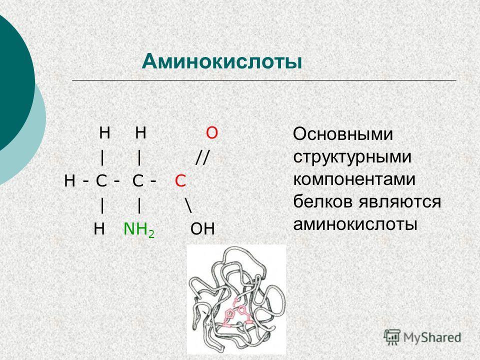 Аминокислоты H H O | | // H - C - C - C | | \ H NH 2 OH Основными структурными компонентами белков являются аминокислоты