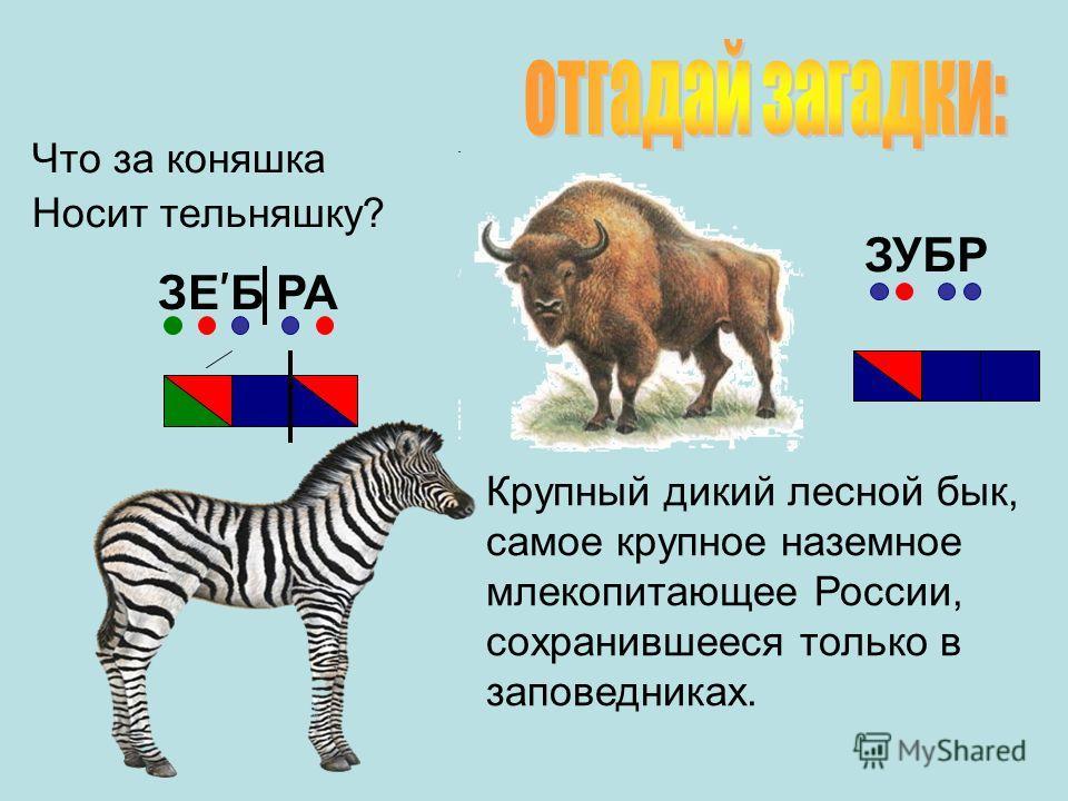 Что за коняшка Носит тельняшку? Крупный дикий лесной бык, самое крупное наземное млекопитающее России, сохранившееся только в заповедниках. ЗУБР ЗЕ Б РА
