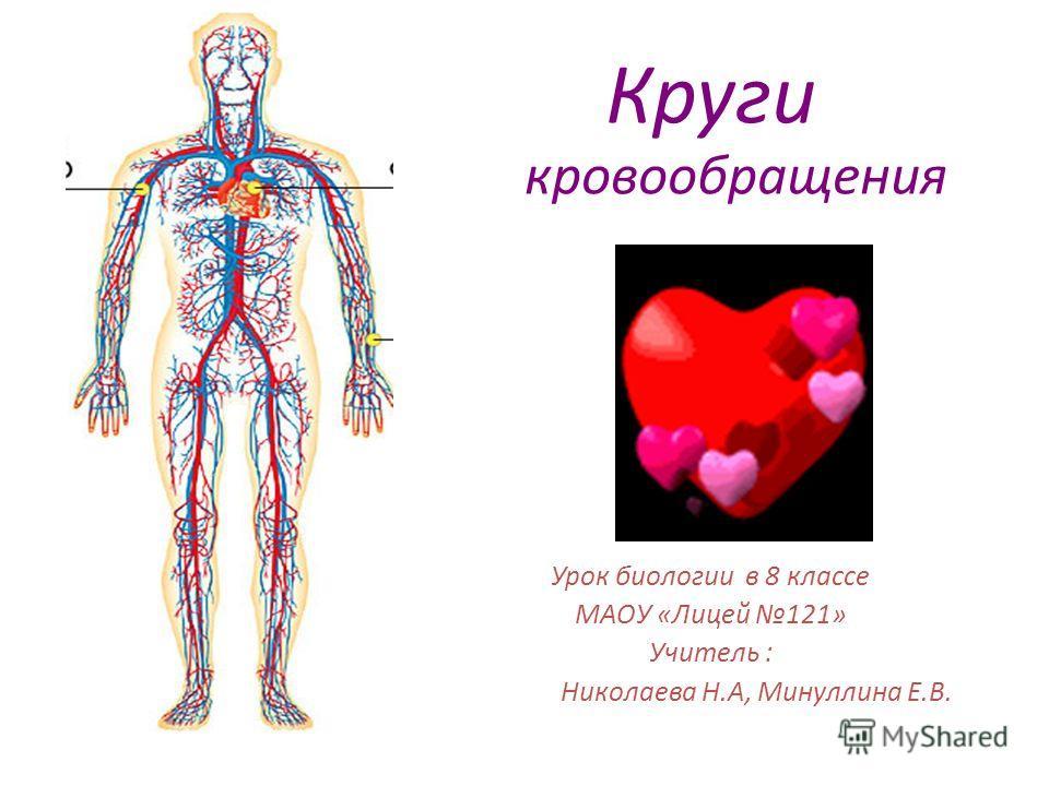 Презентация по биологии 8 класс органы кровообращения