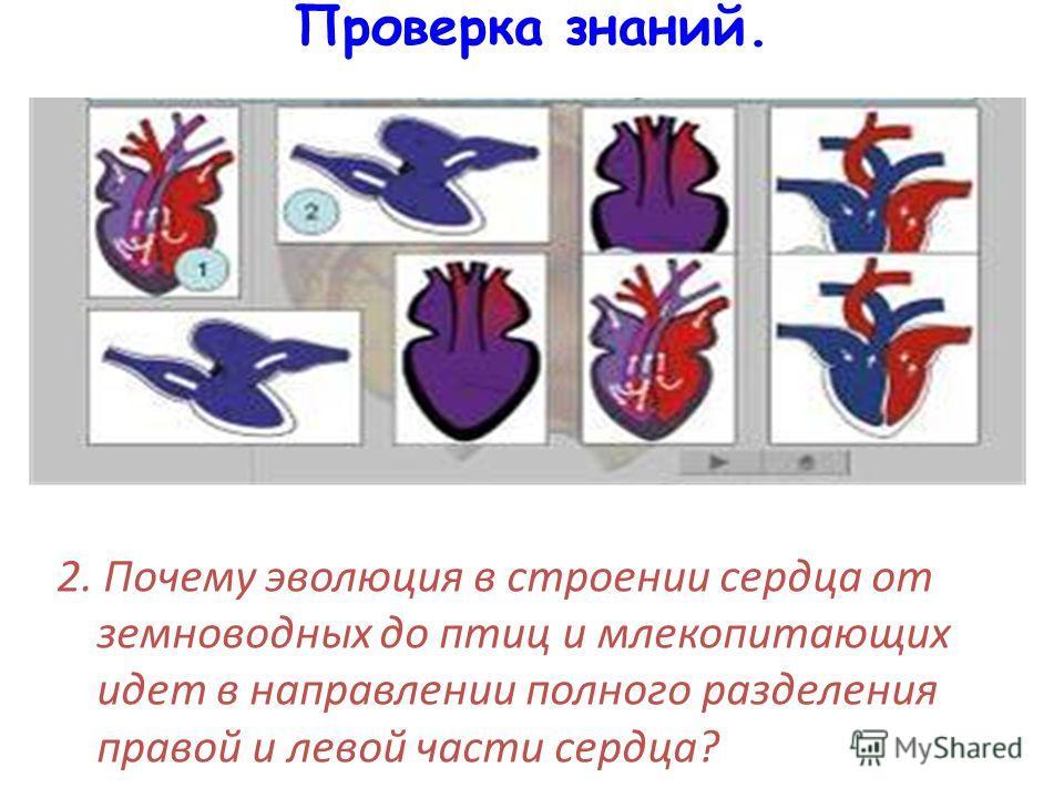 Проверка знаний. 2. Почему эволюция в строении сердца от земноводных до птиц и млекопитающих идет в направлении полного разделения правой и левой части сердца?
