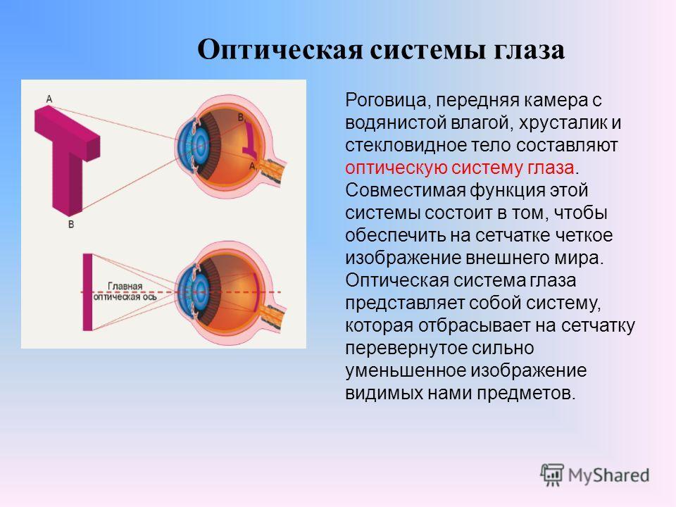Оптическая системы глаза Роговица, передняя камера с водянистой влагой, хрусталик и стекловидное тело составляют оптическую систему глаза. Совместимая функция этой системы состоит в том, чтобы обеспечить на сетчатке четкое изображение внешнего мира.