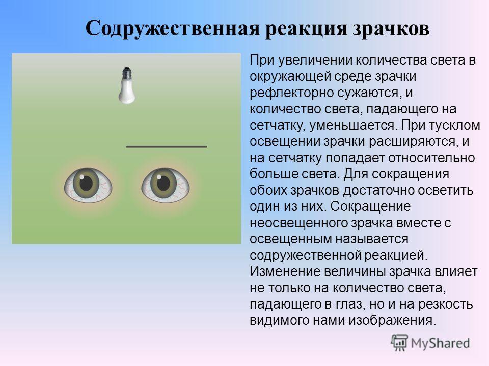 Содружественная реакция зрачков При увеличении количества света в окружающей среде зрачки рефлекторно сужаются, и количество света, падающего на сетчатку, уменьшается. При тусклом освещении зрачки расширяются, и на сетчатку попадает относительно боль