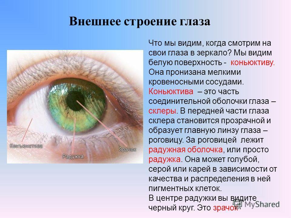 Внешнее строение глаза Что мы видим, когда смотрим на свои глаза в зеркало? Мы видим белую поверхность - коньюктиву. Она пронизана мелкими кровеносными сосудами. Коньюктива – это часть соединительной оболочки глаза – склеры. В передней части глаза ск