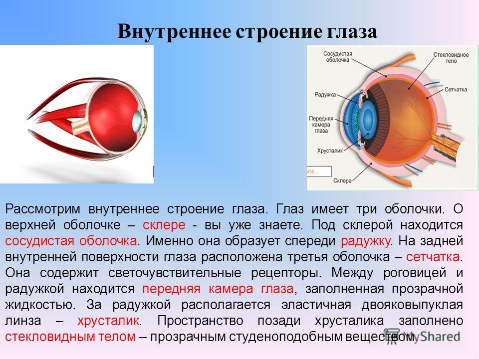 Внутреннее строение глаза Рассмотрим внутреннее строение глаза. Глаз имеет три оболочки. О верхней оболочке – склере - вы уже знаете. Под склерой находится сосудистая оболочка. Именно она образует спереди радужку. На задней внутренней поверхности гла