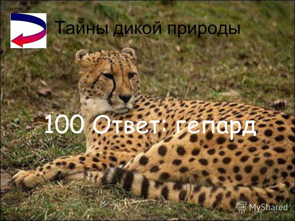 Город Великий Новгород 300 Ответ: князь Мстислав Владимирович