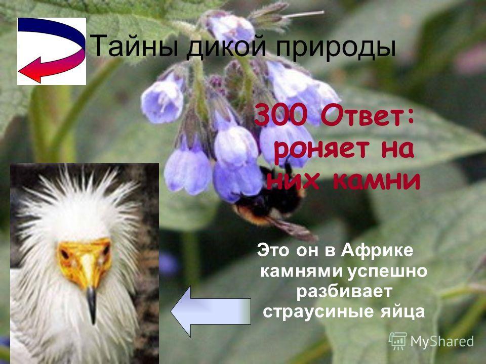 Тайны дикой природы 200 Ответ: птица