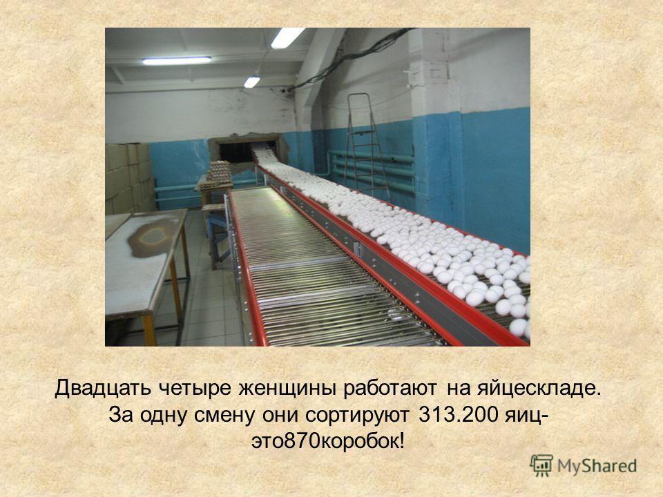 Двадцать четыре женщины работают на яйцескладе. За одну смену они сортируют 313.200 яиц- это870коробок!