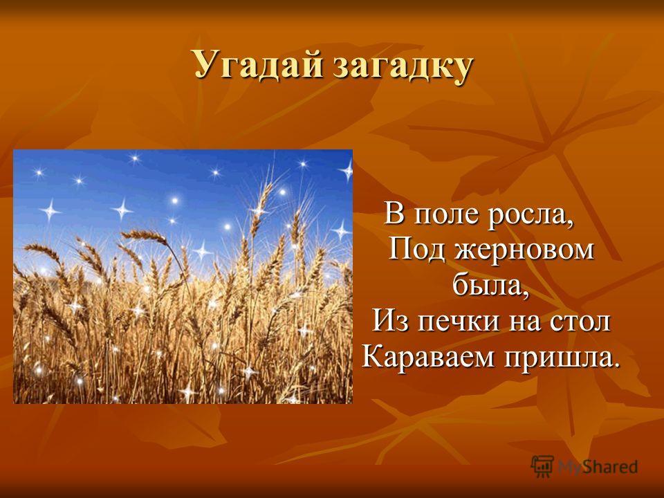 Угадай загадку В поле росла, Под жерновом была, Из печки на стол Караваем пришла.