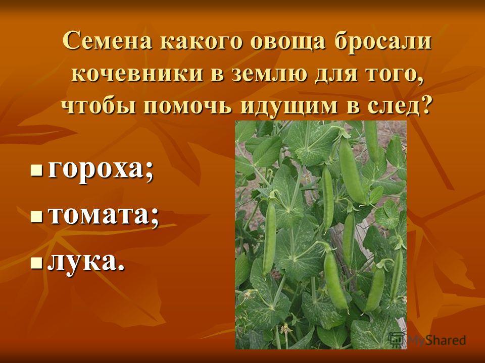 Семена какого овоща бросали кочевники в землю для того, чтобы помочь идущим в след? гороха; гороха; томата; томата; лука. лука.