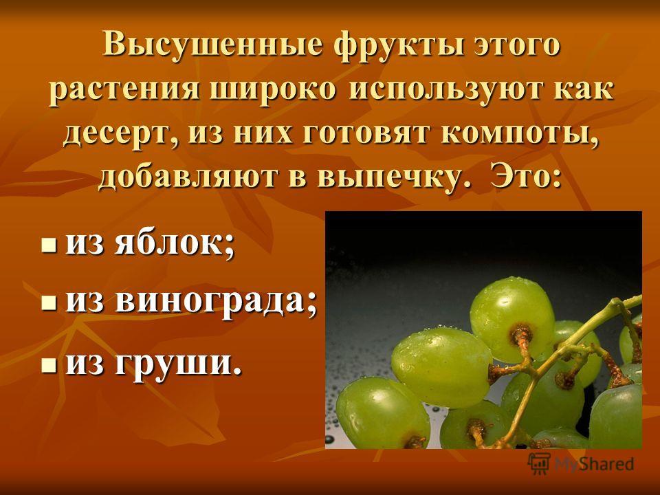 Высушенные фрукты этого растения широко используют как десерт, из них готовят компоты, добавляют в выпечку. Это: из яблок; из яблок; из винограда; из винограда; из груши. из груши.