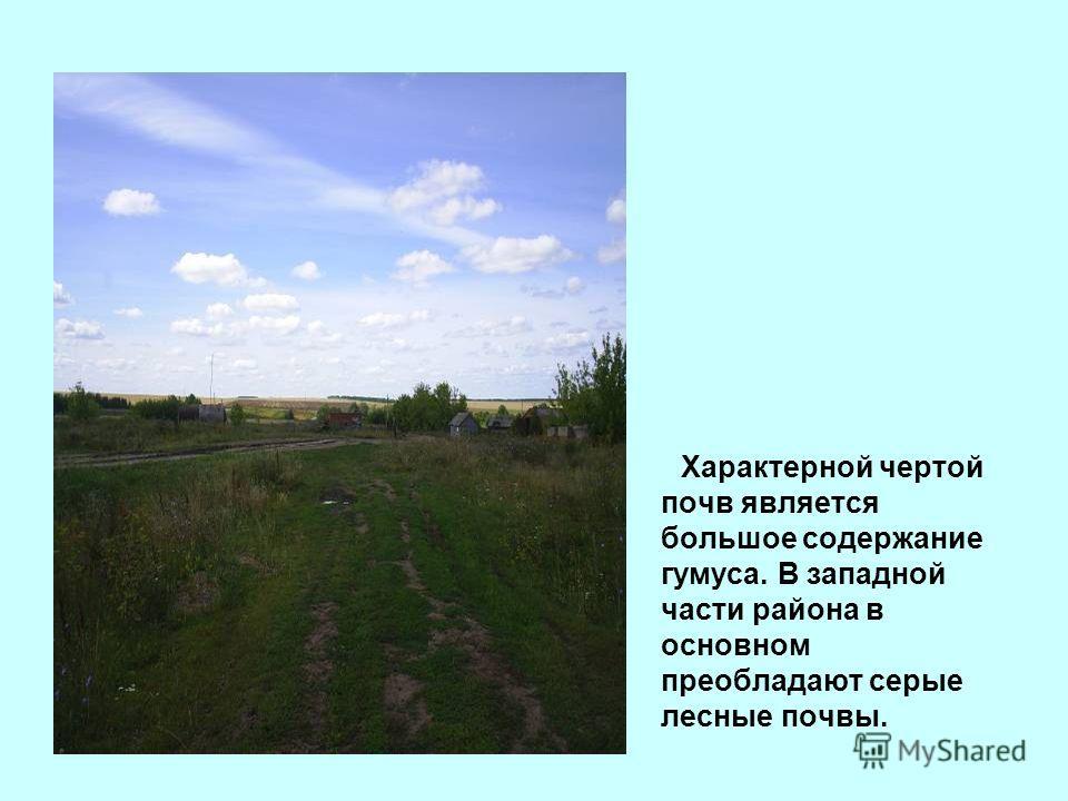 Характерной чертой почв является большое содержание гумуса. В западной части района в основном преобладают серые лесные почвы.