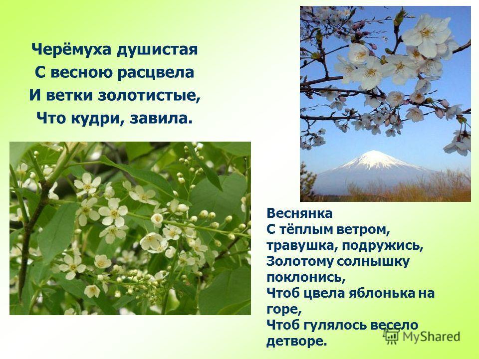 Веснянка С тёплым ветром, травушка, подружись, Золотому солнышку поклонись, Чтоб цвела яблонька на горе, Чтоб гулялось весело детворе. Черёмуха душистая С весною расцвела И ветки золотистые, Что кудри, завила.