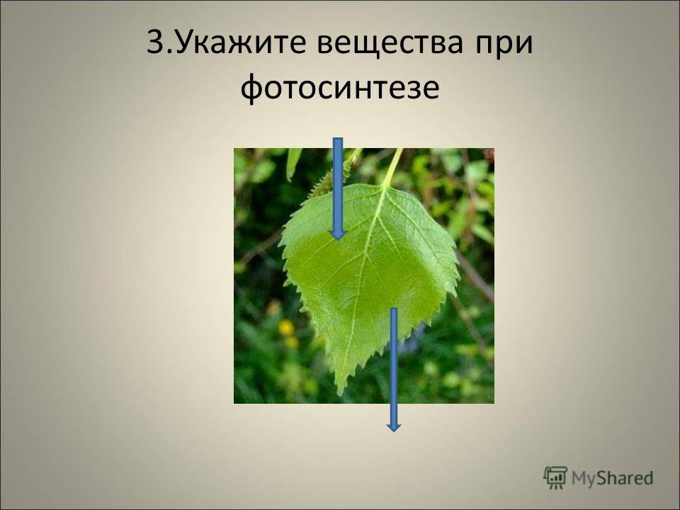3.Укажите вещества при фотосинтезе