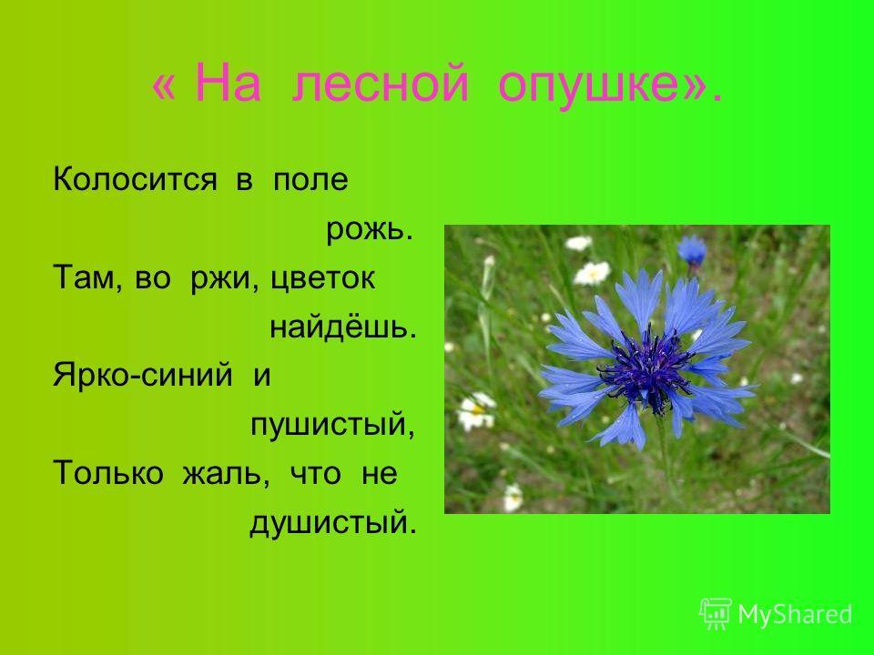 « На лесной опушке». Колосится в поле рожь. Там, во ржи, цветок найдёшь. Ярко-синий и пушистый, Только жаль, что не душистый.