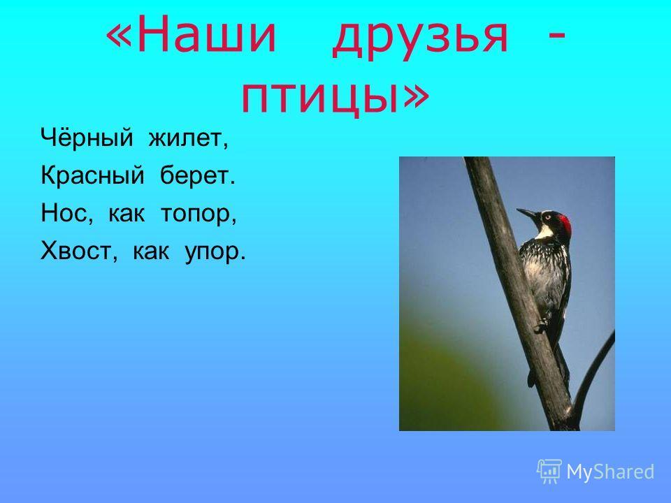 «Наши друзья - птицы» Чёрный жилет, Красный берет. Нос, как топор, Хвост, как упор.
