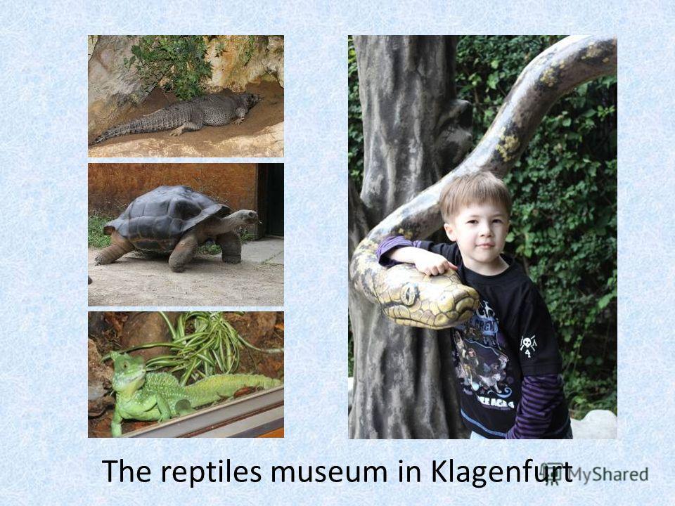 The reptiles museum in Klagenfurt