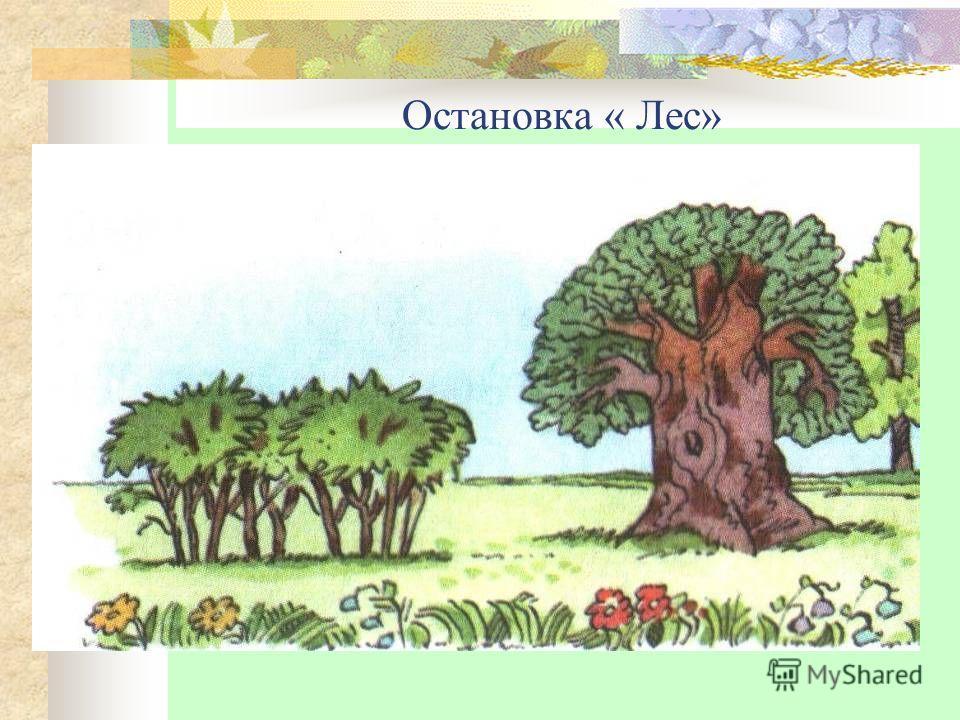Остановка « Лес»