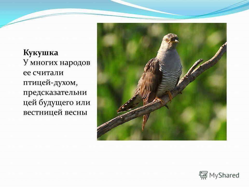 Кукушка У многих народов ее считали птицей-духом, предсказательни цей будущего или вестницей весны