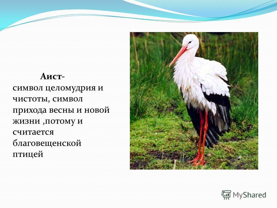 Аист- символ целомудрия и чистоты, символ прихода весны и новой жизни,потому и считается благовещенской птицей