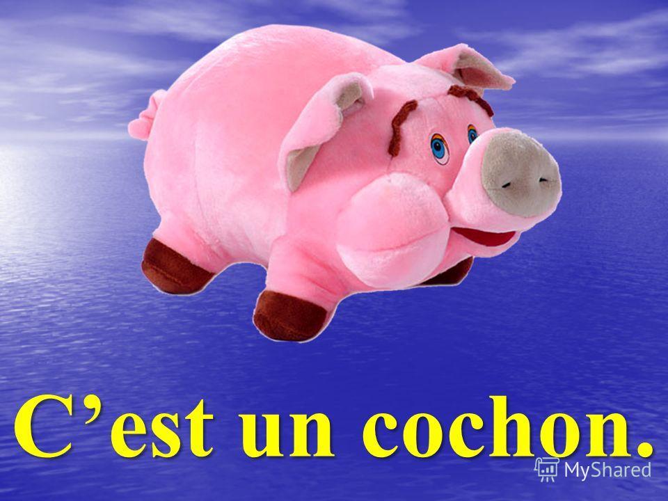 Cest un cochon.